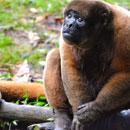 A lonely monkey