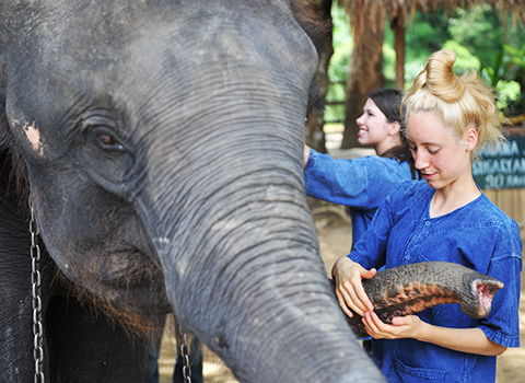 Friends For Asia volunteers with an elephant