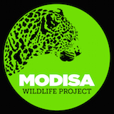 Modisa Wildlife Project Logo