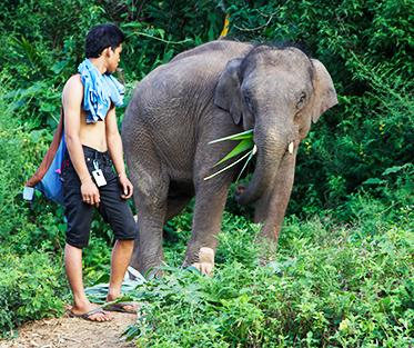 a mahout and an elephant in Thailand