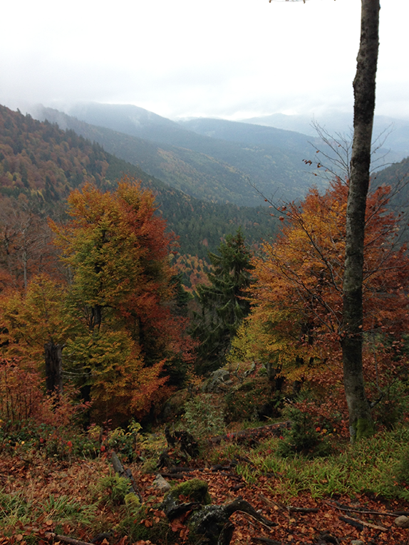 Hiking in the Vosges Mountains in France