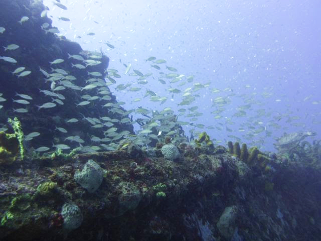 School of fish in the Caribbean