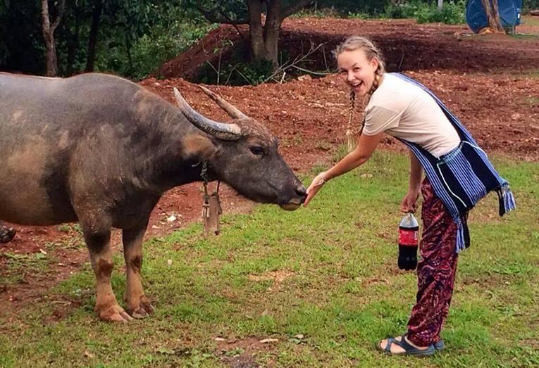 Volunteer petting a water buffalo in Thailand