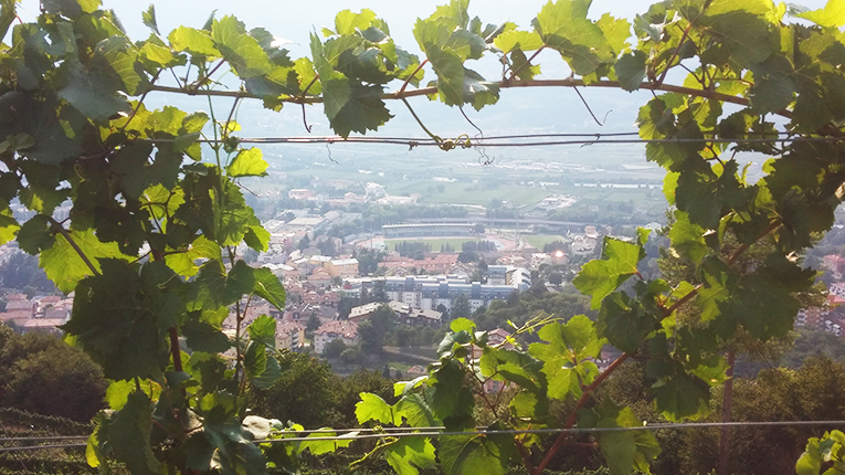 View of a village in Trento, Italy through vines