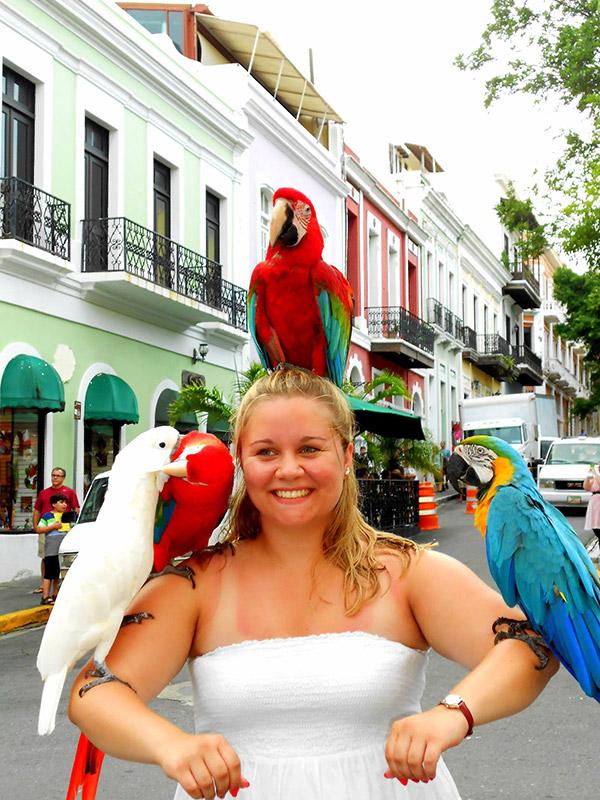 Colorful parrots in San Juan, Puerto Rico