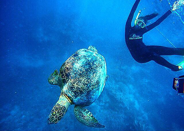 Scuba diver and turtle along the Great Barrier Reef in Australia