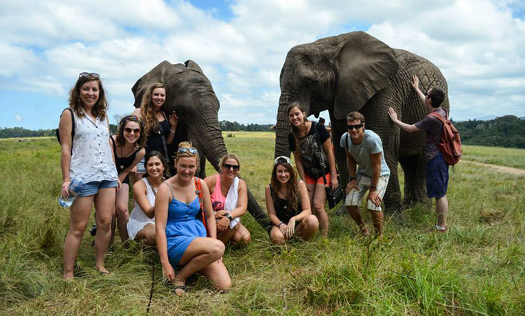 Elephants in the Garden Route, South Africa