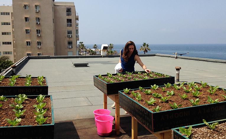 Seedlings growing on a rooftop in Beirut