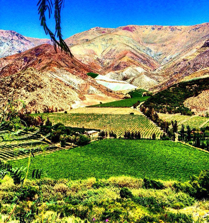 Valle del Elqui in the Coquimbo region of Chile