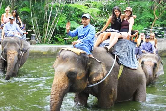 Elephant riding in Ubud, Bali, Indonesia