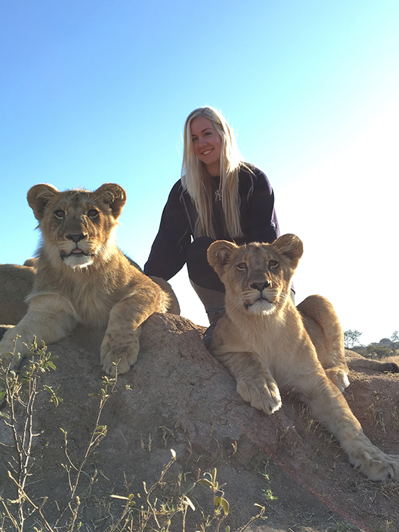 Volunteer with lions at Antelope Park, Zimbabwe