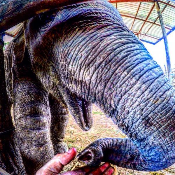 """""""elephants thailand"""""""