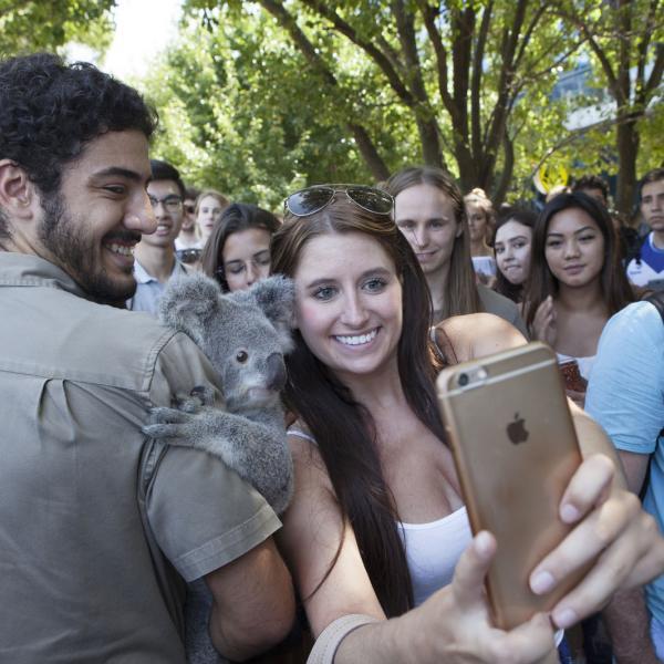 Koala on Campus