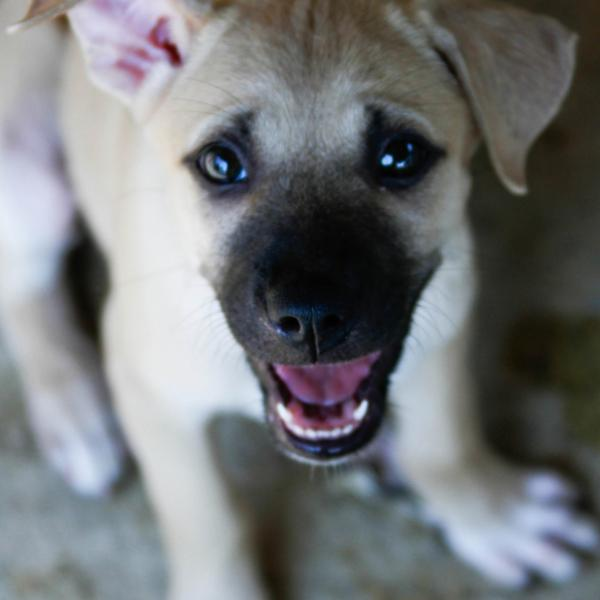 Blink, a puppy at Rescue Paws