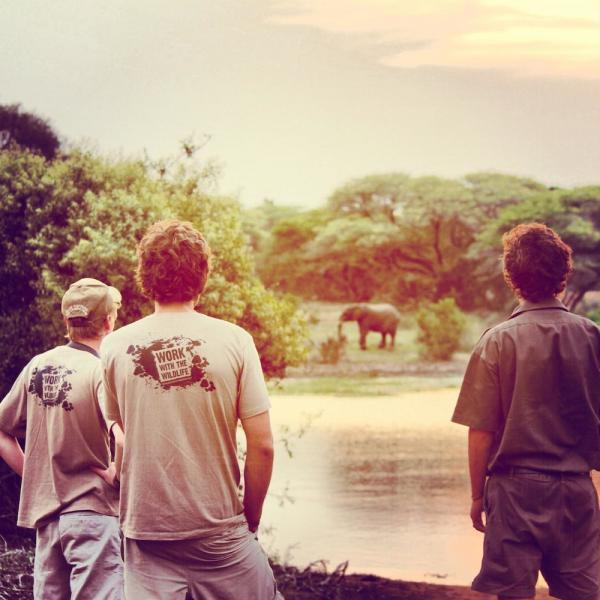 Volunteers watching elephants eat