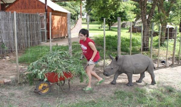 Cutting grass for bedding with a rhino in tow