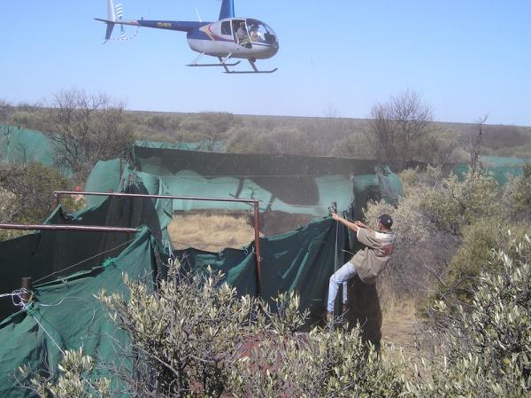 Helicopter Assisted Capture