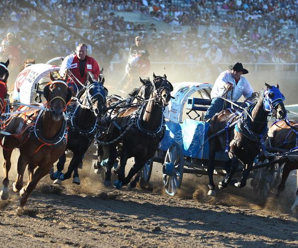 Experience the Calgary Stampede with Working Holiday in Canada