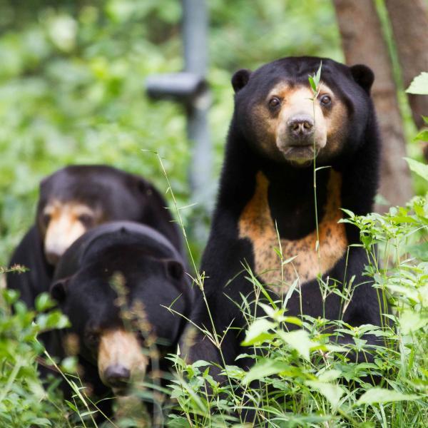 Cambodia Bear Rescue