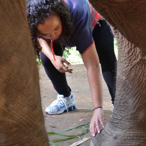 Elephant Exam Toes Sweat