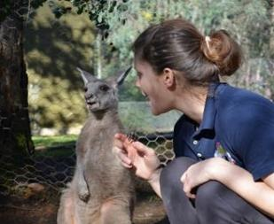 Wildlife Conservation in Australia with Love Volunteers!