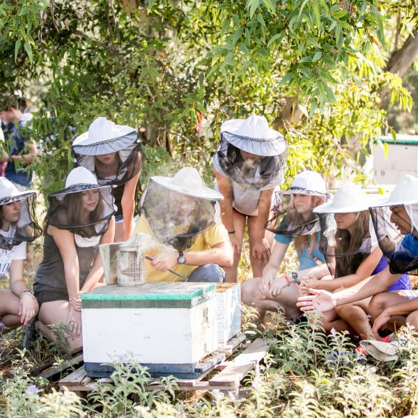 Greek Summer Beekeeping