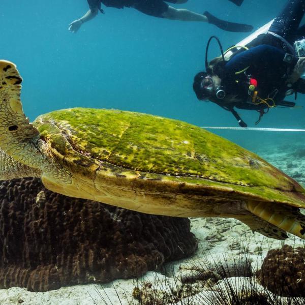 Thailand Marine Conservation