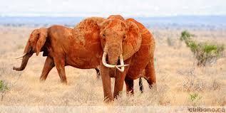 Game reserve Kenya volunteering with inspirevolunteering.com