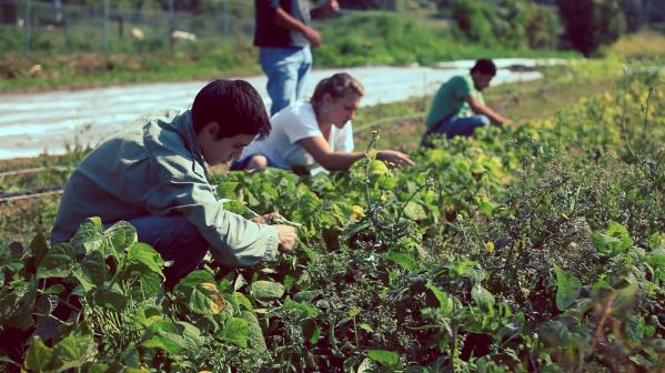 Work in Environmental Research in Mexico with IVHQ