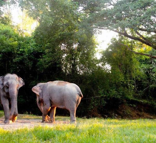 Pod Elephant Care in Thailand