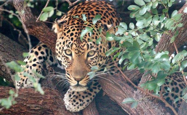 wildlife, children, animals, education, environment