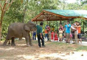 Care for Animals at a Wildlife Park in Malaysia | Travellersworldwide.com