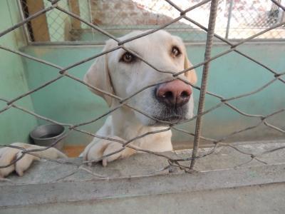 Rescued dog, Bolivia, Volunteer Abroad