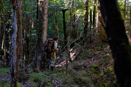 Okaihau Forest - Adventure For Good