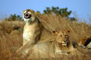 Wildlife and Game Reserves Conservation Expedition, South Africa | Travellersworldwide.com