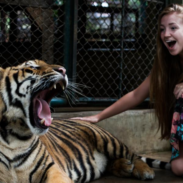 Petting a tiger for the first time