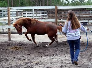 Care for and rehabilitate abused wild mustangs in America | travellersworldwide.com