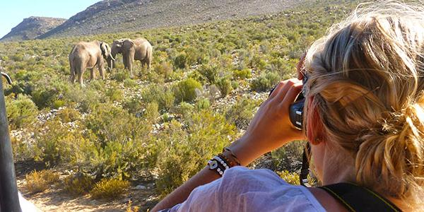Photographing wildlife on a South African Sarafi. Photo by ISA alumna Heather OKeeffe