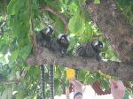 beach, animals, wildlife, brazil, recife, pernambuco, monkeys