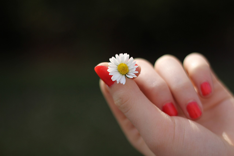 Manicured hand holding a small daisy