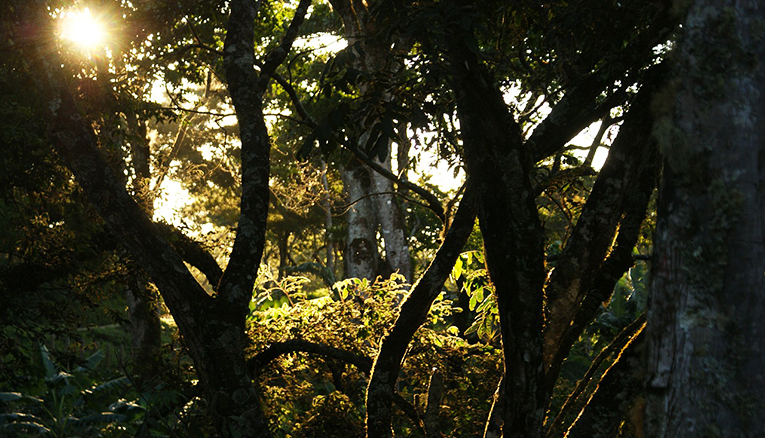 Amacayacu National Park