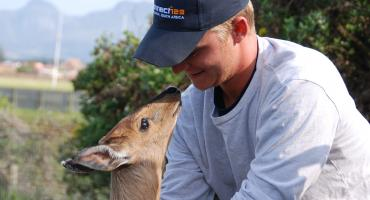 An intern gets up close and personal with a duiker antelope at one of South Africa's many nature reserves
