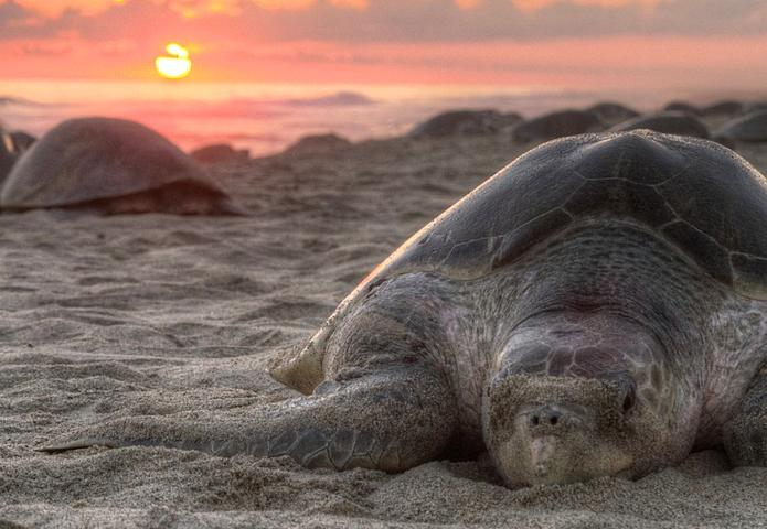 Turtles chilling on the beach at sunset