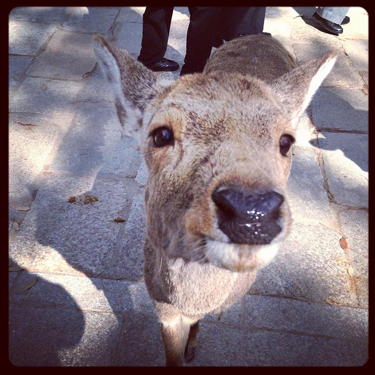 Animal in Nara Park