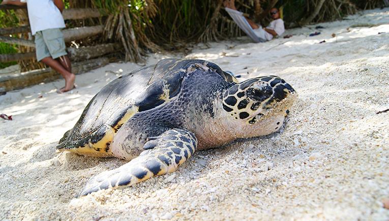 Sea turtle on a beach