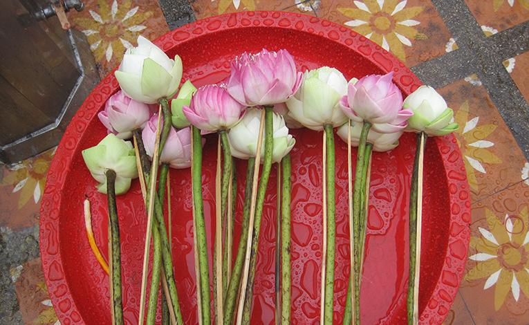 Rain strewn flowers