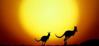 Capturing the Australian sunrise with the kangaroos.