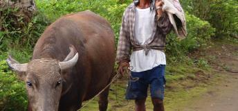 Try a different adventure like plowing with a carabao. This can suprisingly provide you a unique experience