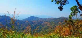 A View in Doi Suthep National Park