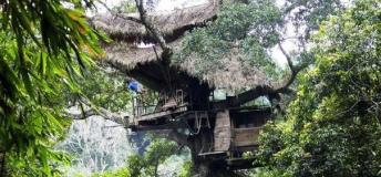 Live in treehouses and zipline through the forest in northern Laos